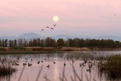 Full Mooon Setting at Sunrise Over Duck Pond